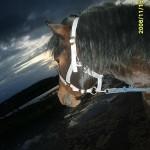 i_emaituk_gyvenimo_20110525_1179760562