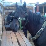 vaidoto_digaiio_ygis_aplink_baltijos_jr_20120904_1126749120