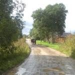 vaidoto_digaiio_ygis_aplink_baltijos_jr_20120904_1991956349