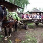 zygys_pamariu_20111211_1300836861